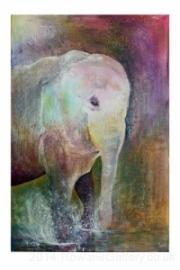 andi-oakley-elephant_large